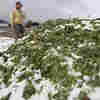 For Fukushima's Farmers, Growing Uncertainty