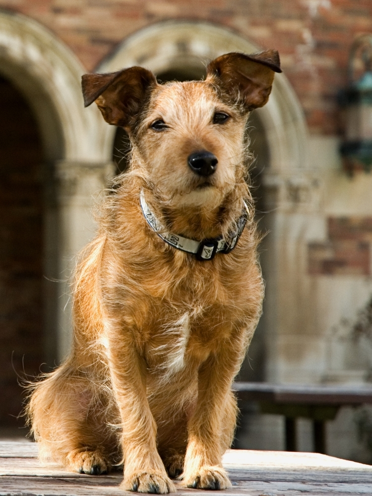 Monty The Dog Hits The Stacks At Yale Law Npr