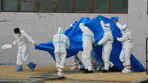 Japan Self-Defense Force officers in radiation protection suits hold a blue sheet over patients who were exposed to high levels of radiation at the Fukushima Dai-ichi nuclear power plant on March 25. A team of experts at Japan's National Institut