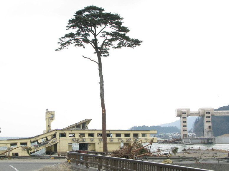 tree of hope stands as poignant symbol in japan