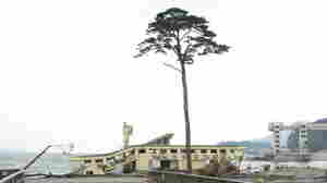 'Tree Of Hope' Stands As Poignant Symbol In Japan