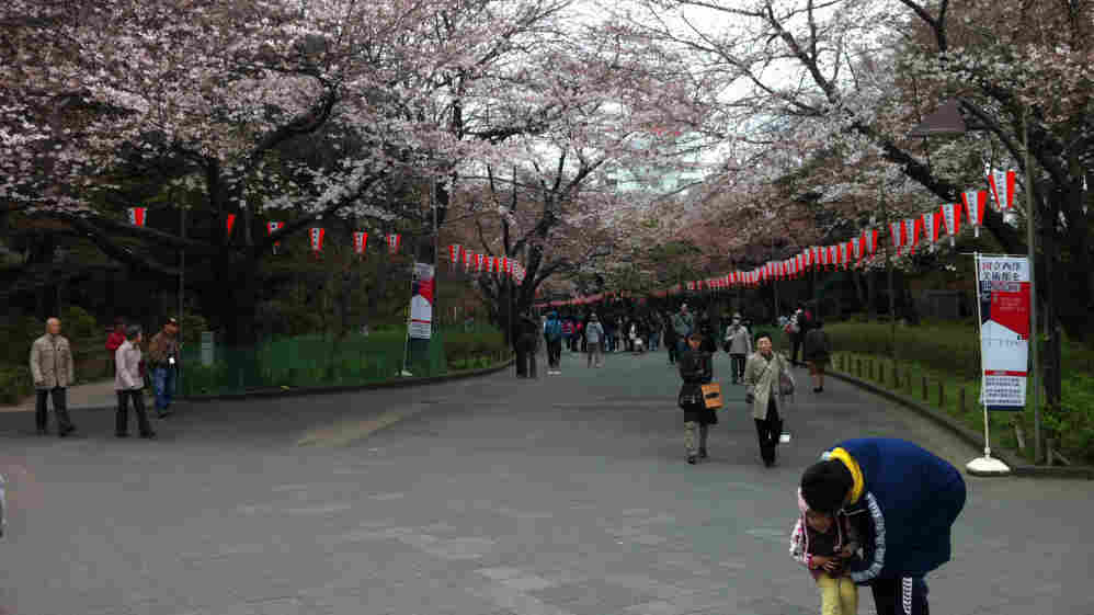 With its bountiful cherry blossoms in full bloom, Ueno Park was a draw for Tokyo residents over the weekend, some of whom ignored discouragement from the city's governor and carried out their annual hanami gatherings despite Japan's crisis.