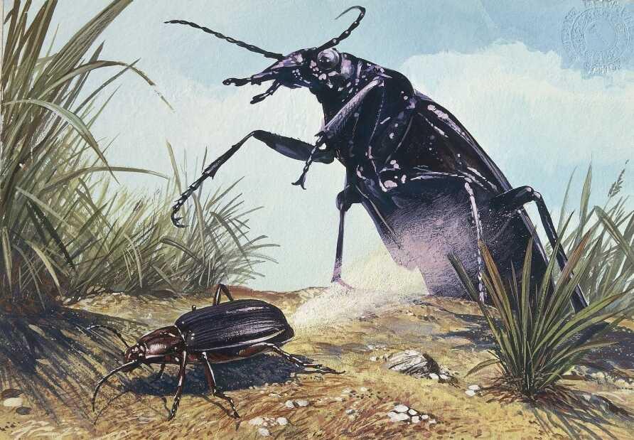 Beetle makes rocket fuel