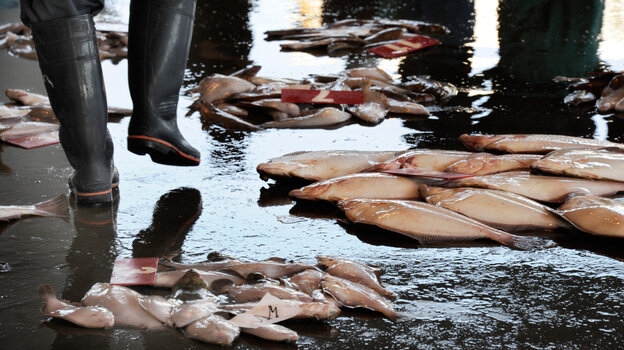 A broker walks between fish at the Hirakata Fish Market in Kitaibaraki, Ibaraki prefecture. The Health Ministry said that iodine-131 at a level of 4,080 becquerels per kilogram had been detected in a small fish called konago, or sand lance, caught off Ibaraki prefecture, south of the plant.