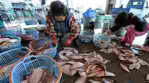 Women were sorting fish earlier today at the Hirakata Fish Market in Kitaibaraki, Ibaraki Prefecture. It was the first time the market had been open since the March 11 earthquake and tsunami.