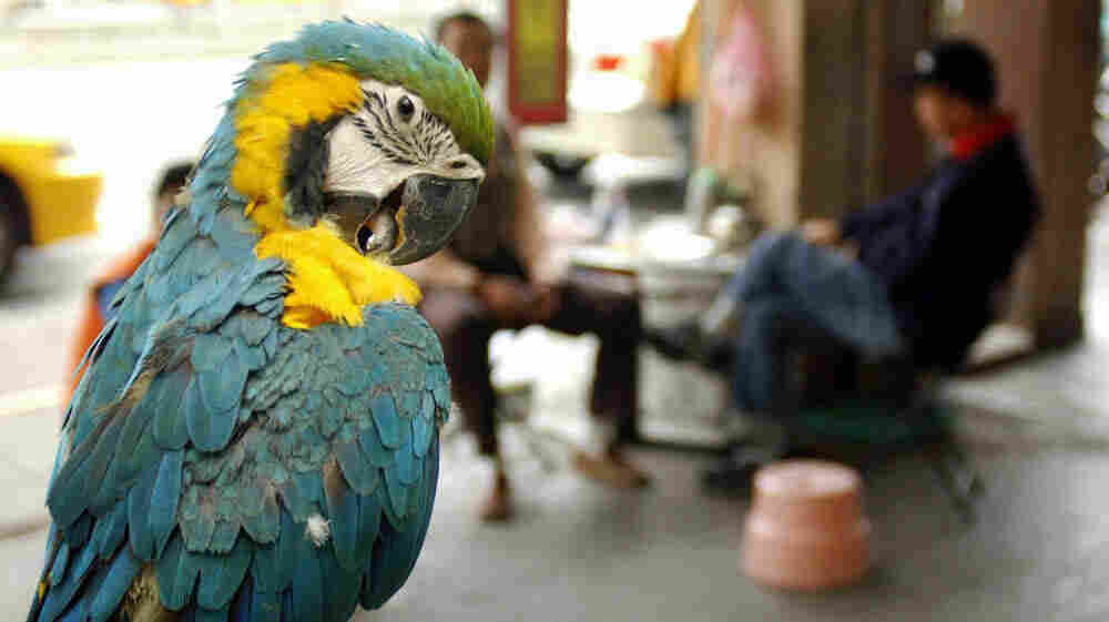 Got something to say? A pet parrot sits on its perch in Taiwan.