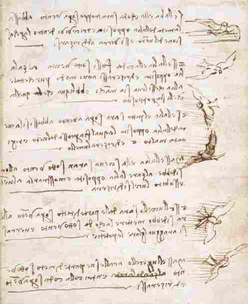 da Vinci's birds