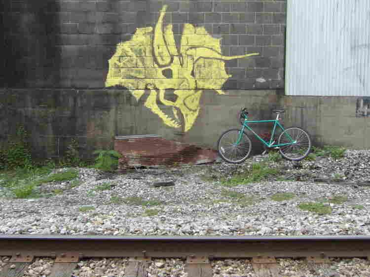 Torosaurus graffiti or Triceratops graffiti ?