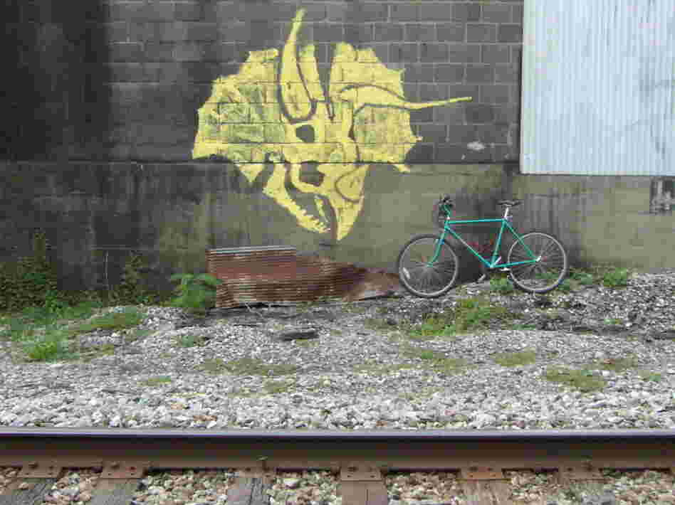Torosaurus graffiti or Triceratops graffiti ?