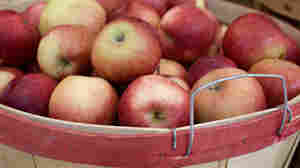 Originally from Massachusetts, John Chapman — better known as Johnny Appleseed — sowed apple seeds across Illinois, Indiana and Ohio in the 1790s.