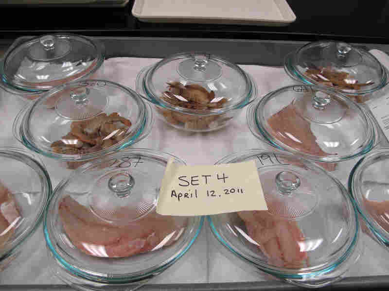 Seafood samples are placed in Pyrex dishes to await sensory analysis. Inspectors will sniff for the slightest whiff of oil. Samples are also cooked  for a taste test to detect any problems.