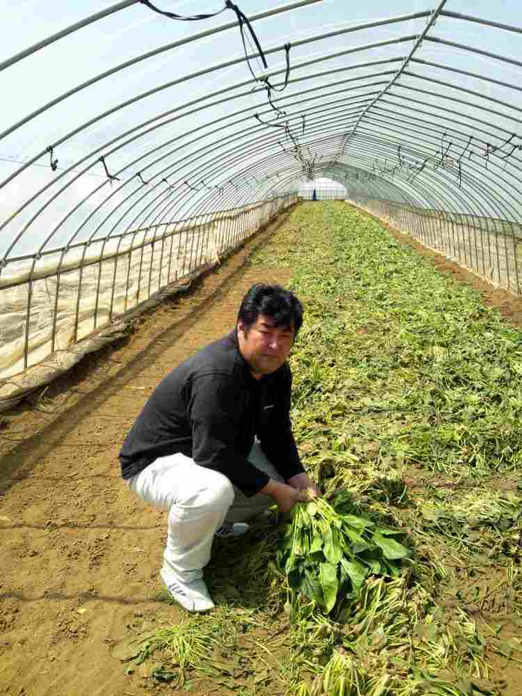 Katsunobu Yatagawa surveys the spinach crop he had to destroy because of radiation concerns. Farmers like Yatagawa in the Ibaraki prefecture are facing a ban on the sale of some of their products, and an uncertain future.
