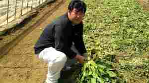 Japanese Farmers Linger In State Of Uncertainty