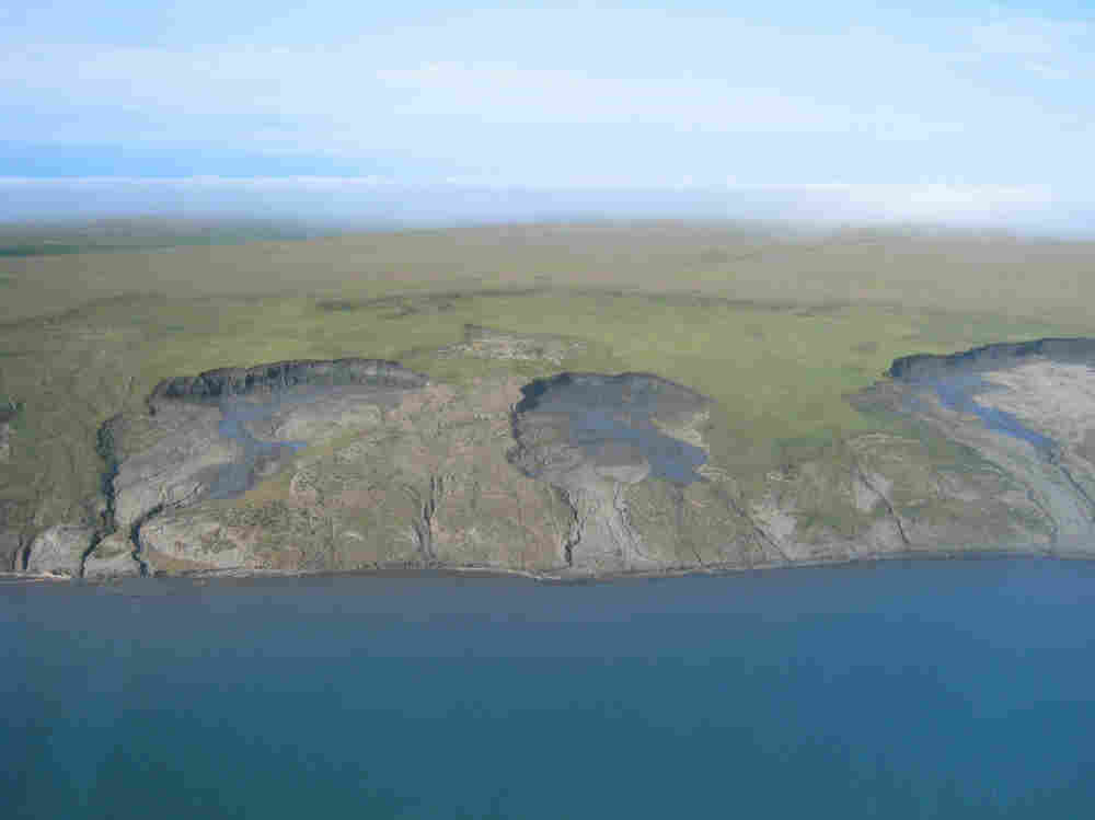 Large slumps of coastal land are caused by the thawing and erosion of ice-rich permafrost. As a result, large quantities of sediment are introduced into the coastal ecosystem, which alters the food web.
