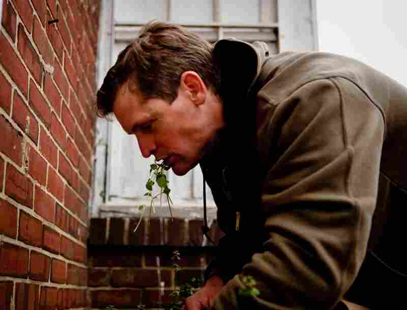 Thayer chomps on some common chickweed while digging for more wild treats in the green spaces around Washington, D.C.