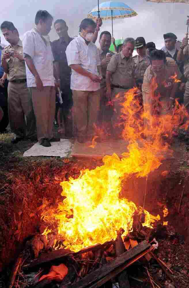 Indonesian officials burned poultry and bird cages, believed to be infected by the H5NI virus, in Jakarta on March 25, 2009.