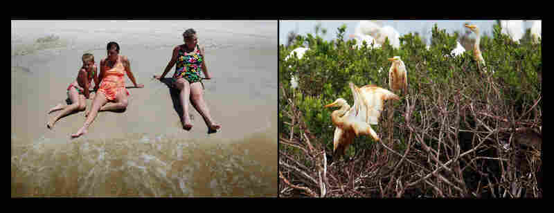 Left: Vacationers enjoy the shoreline in Biloxi, Miss., July 4, 2010. Right: Egrets with oil-stained feathers stand on a barrier island in Cat Bay, near Grand Isle, La., June 28, 2010.