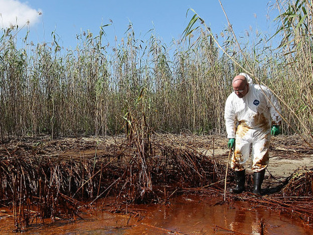 Phil Radford, executive director of Greenpeace USA, inspects oil-covered reeds while visiting the disaster site on May 20, 2010 south of Venice, Louisiana. A year after the spill, BP has yet to distribute $450 million dollars to scientists studying the disaster.