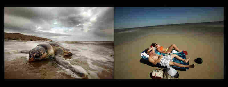 Left: A dead sea turtle washed onto shore in Waveland, Miss., April 14, 2011. Right: Tourists lounge on the beach in Pass Christian, Miss., April 16, 2011. BP says it has made tourism payments of $18 million to Mississippi in an attempt to help draw tourists back to its beaches.