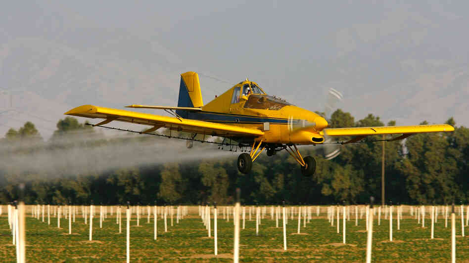 A crop duster airplane sprays a powerful organophosphate pesticide on cotton and potato fields near Bakersfield, Calif. Researchers in three s