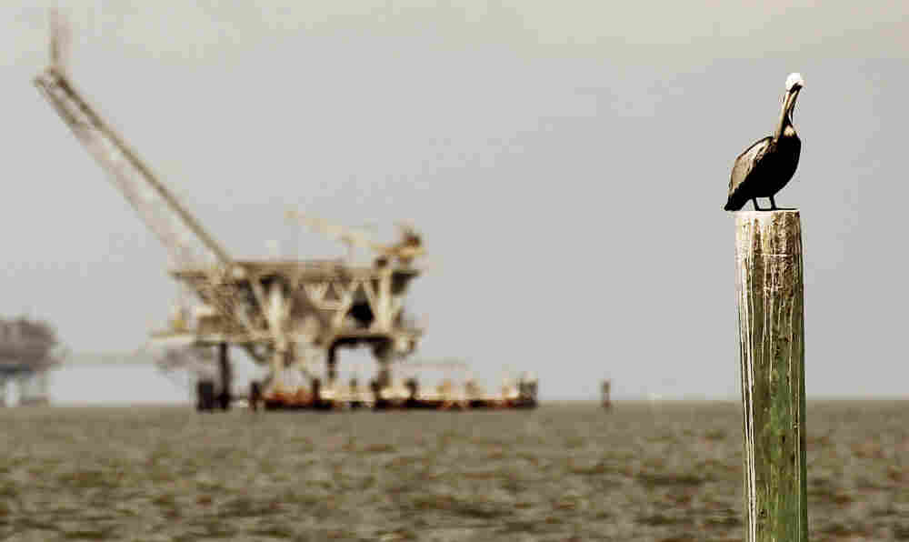 A pelican rests on a piling with an oil rig in the background April 18, 2011 in Dauphin Island, Ala.