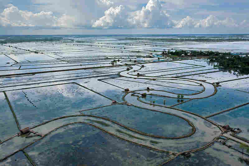 In the briny south, farmers have converted waterlogged rice fields into ponds for salt-tolerant shrimps and crabs.