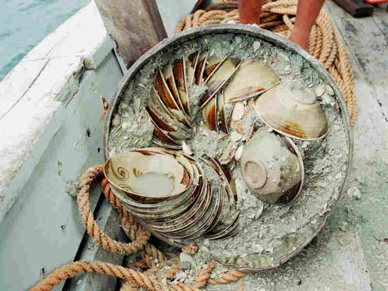 Archaeologist Michael Flecker's team found thousands of ceramic bowls neatly stacked on the ocean floor. Some were looted by local fishermen between excavation seasons.