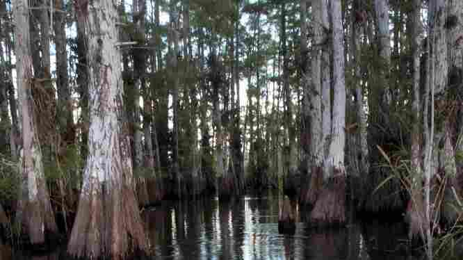 Florida's Legislature is cutting some $30 million from Everglades restoration to help close the state's $4 billion budget shortfall.