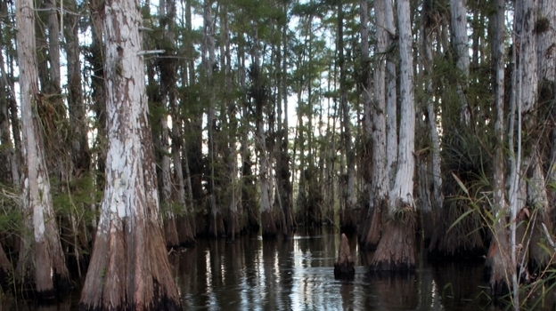 Florida's Legislature is cutting some $30 million from Everglades restoration to help close the state's $4 billion budget shortfall. (Getty Images)