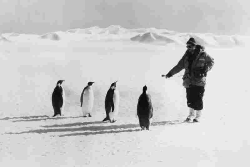 Ira Flatow interviews penguins in Antarctica in 1979 (photo by Katherine Bouton).