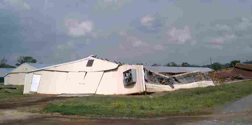 A tornado-damaged poultry house in Blount County, Ala. State officials say 3 million chickens died in the storms.