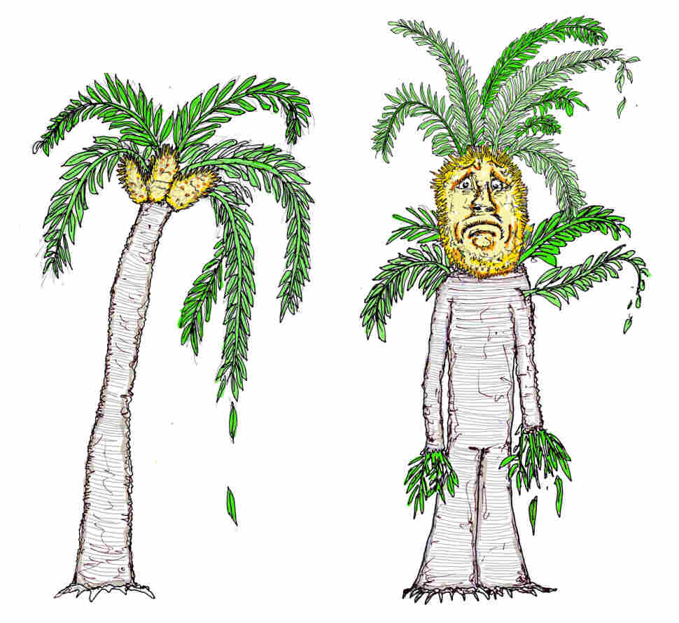 Illustration of a cycad and an Ent.