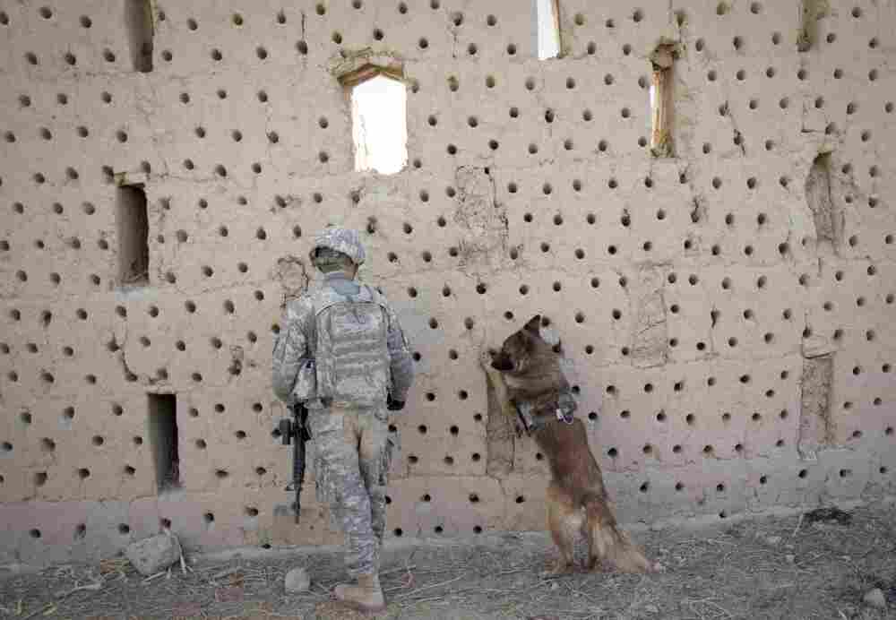 U.S. sergeant Matthew Templet and his bomb-sniffing dog Basco search for the explosives in an abandoned house in Haji Ghaffar village during a clearance patrol in Zari district of Kandahar province on Dec. 27, 2010.