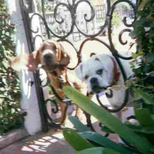 Postman's Photos Prove Canine Cliche