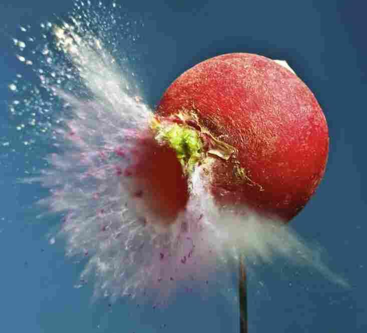 """Faster Radish, Kill Kill! """"A pedestrian shot of a super-fast, ultra-light pellet hitting a radish."""""""