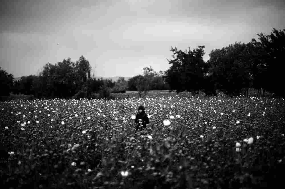 A girl stands in the middle of a poppy field as Marines pass by on patrol.