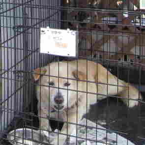 Risky Rescue: Saving Pets From Japan Exclusion Zone