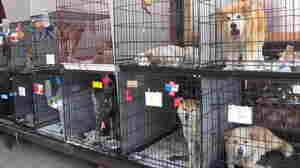 The Japan Animal Rescue shelter in Samukawa houses about 200 dogs and cats, most of them brought in from the now off-limits area around the Fukushima Dai-ichi nuclear power plant.