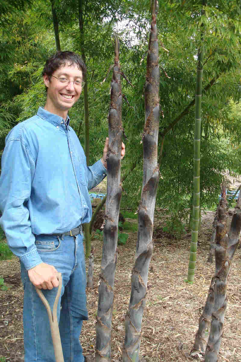 Dain Sansome stands near bamboo stalks on the 9-acre farm he owns with his wife, Suya, who is Japanese.