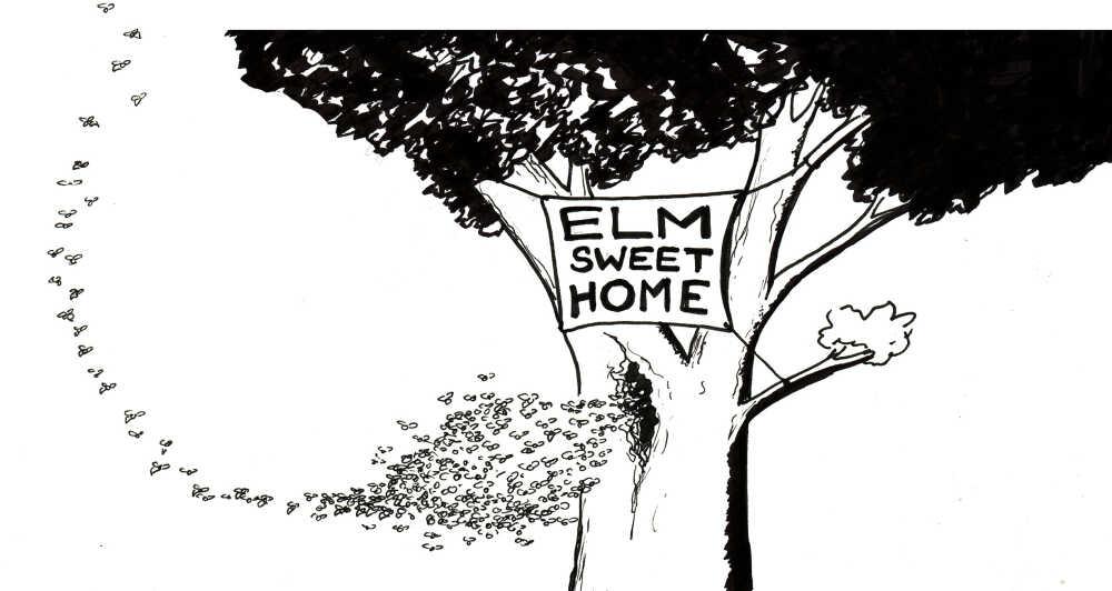 Elm sweet home.