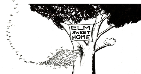 Elm sweet home.