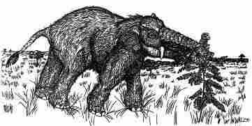Lambert's vision of Platybelodon.