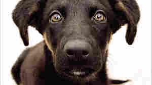 The New Science Of Understanding Dog Behavior