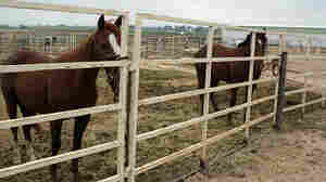 Three of Becca Francis' horses contracted EHV-1 at a horse event in Utah; one had to be euthanized.
