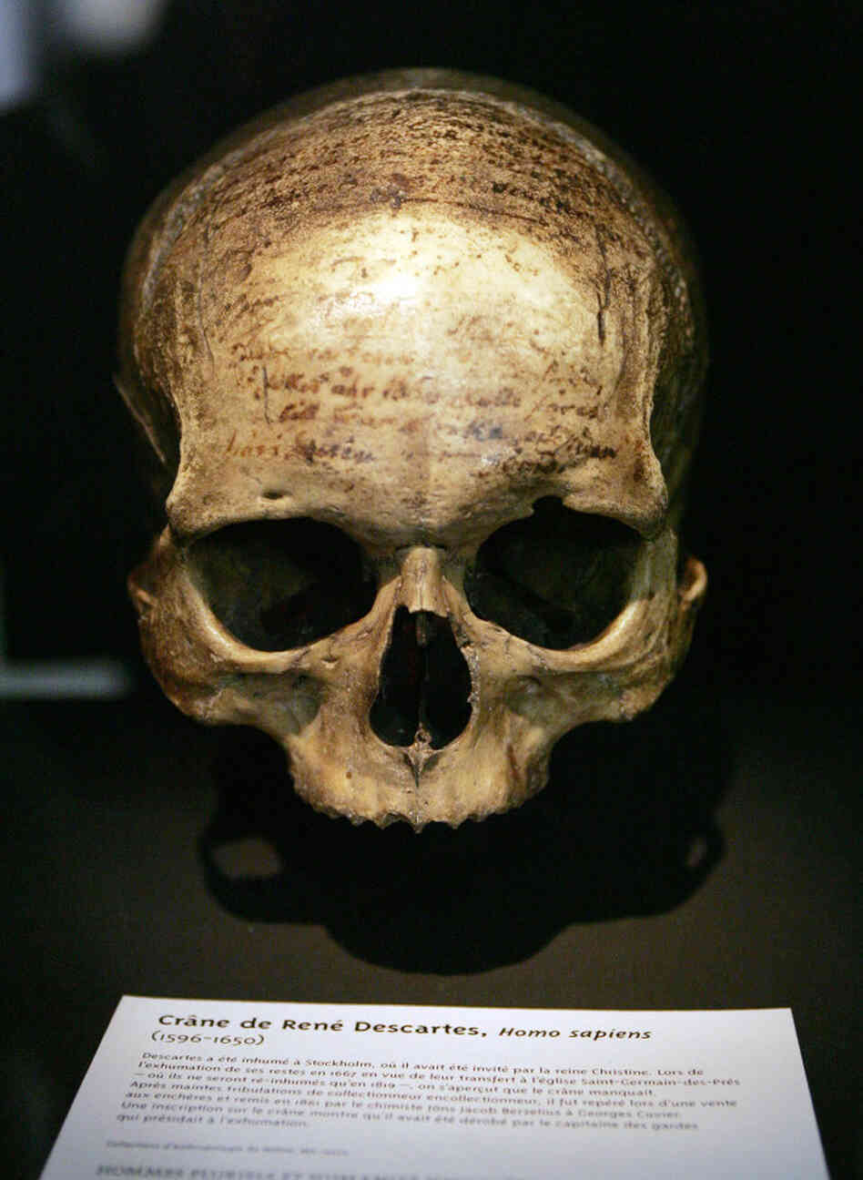 The skull of French philosopher Rene Descartes (1596-1650), displayed at the Musee de l'Homme in Paris.