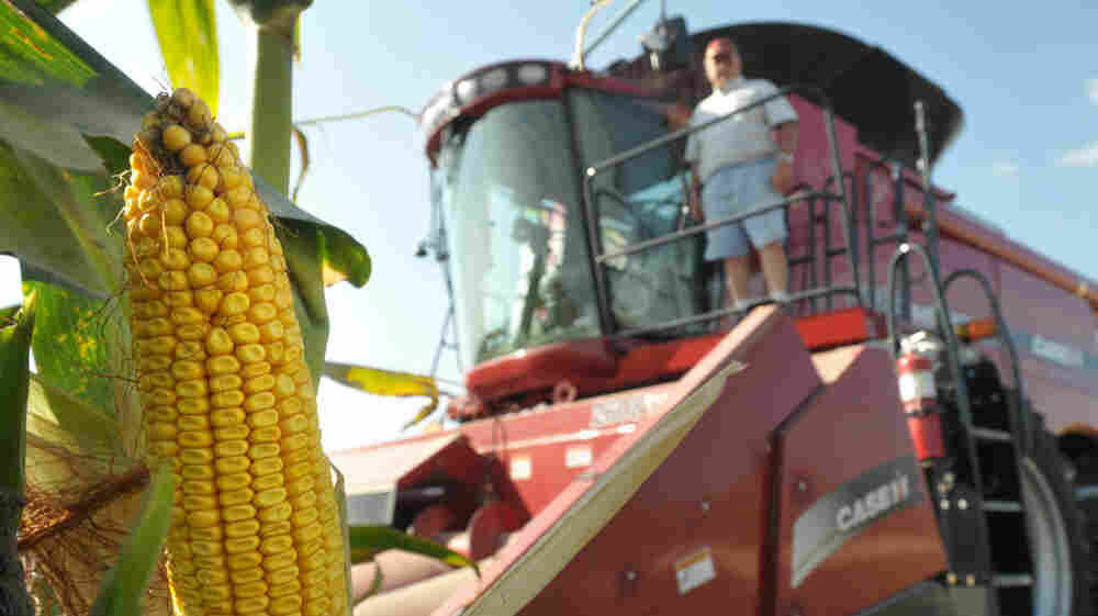 Corn is big business in Iowa, which has usually made anything but support for ethanol subsidies off-limits for presidential hopefuls.
