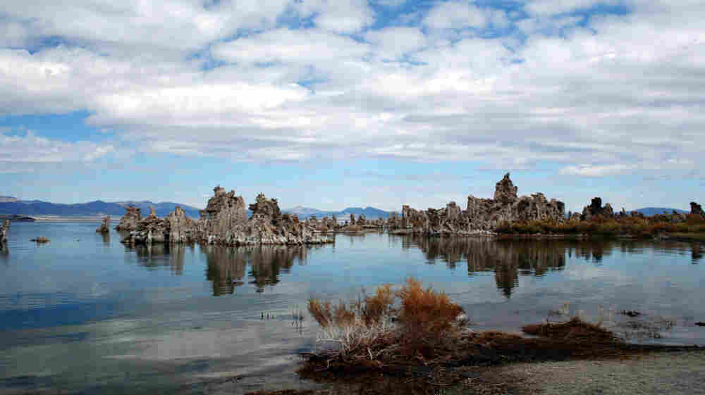 A study published in the journal Science last December suggested that a bacterium found in California's Mono Lake was able to substitute arsenic for phosphorous. But that conclusion has many critics.