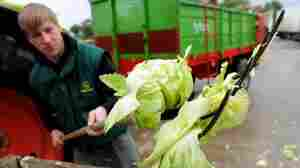 German farmer Tim Voges destroyed produce in the town of Ronneburg because of suspicion that vegetables could be contaminated with Enterohaemorrhagic E. coli bacteria.