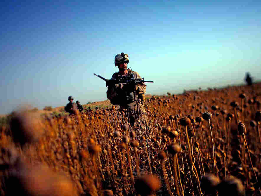 U.S. Marines with Golf Company patrol with Afghan forces  through a harvested poppy field in Northern Marjah, Helmand Province, Afghanistan.