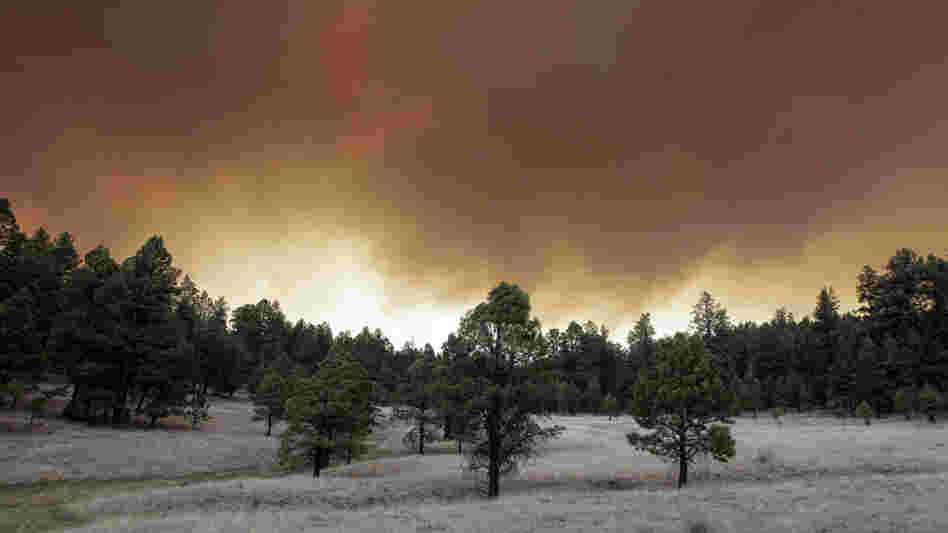 Smoke plumes from the Wallow Fire rose over the Apache-Sitgreaves National Forest near Luna, N.M., on Monday (June 6, 2011).